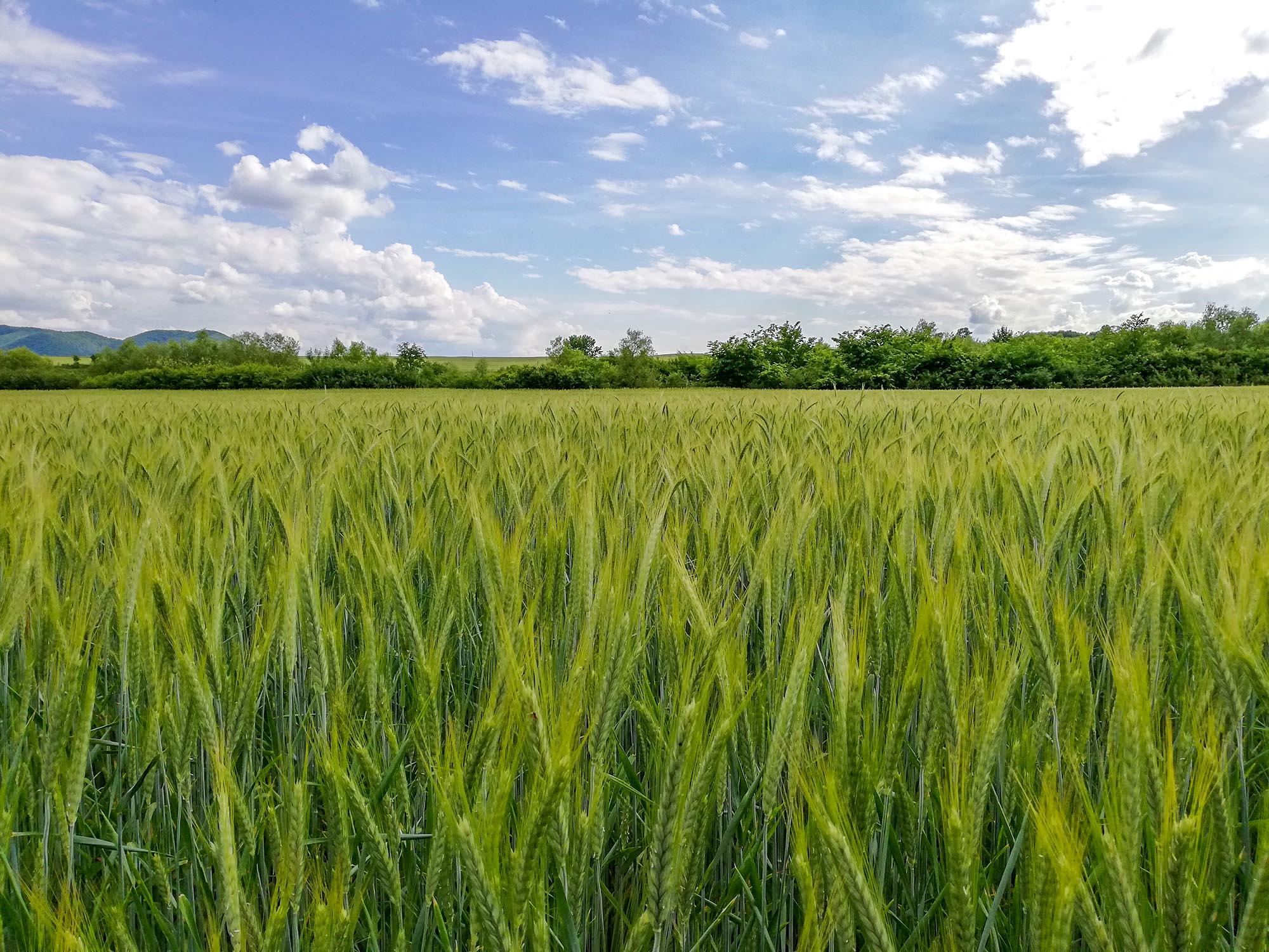 Ferma Ecolact – cereale bio